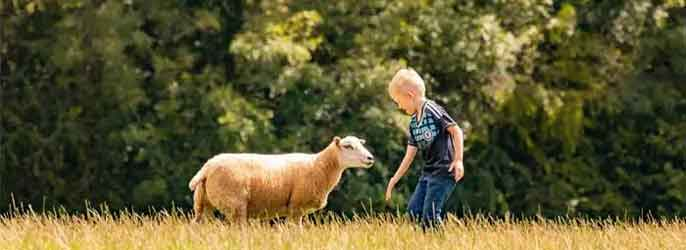 Summer Open Day Is Here At Goodheart Animal Sanctuaries