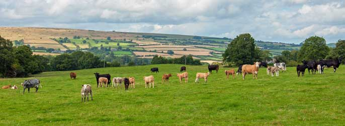 Artisan Gloucestershire Food And Drink Producers